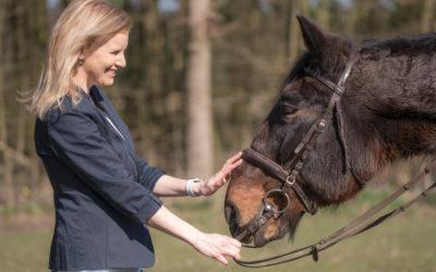 Mit dem Pferd vor Gericht – Was ist eigentlich Pferderecht?