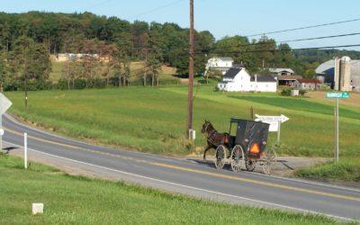 Wenn viele PS auf eine Pferdestärke treffen: Autos und Pferde im Straßenverkehr